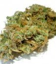 White Russian Serious Seeds