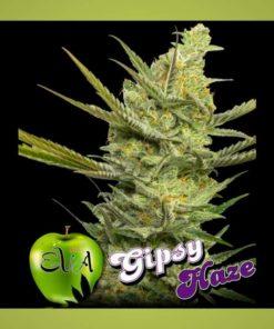 Semilla de Marihuana Gipsy Haze - EVA Seeds