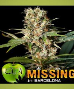Semilla de Marihuana Missing in Barcelona - EVA Seeds