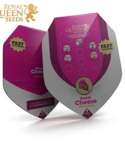 Semilla de Marihuana Royal Cheese Fast Version - Royal Queen Seeds