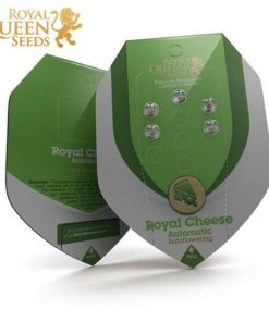 Semilla de Marihuana Royal Cheese - Royal Queen Seeds Auto
