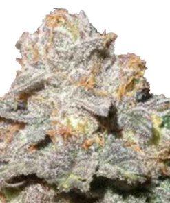Semilla de Marihuana Somango Mayor - Sputnik Seeds